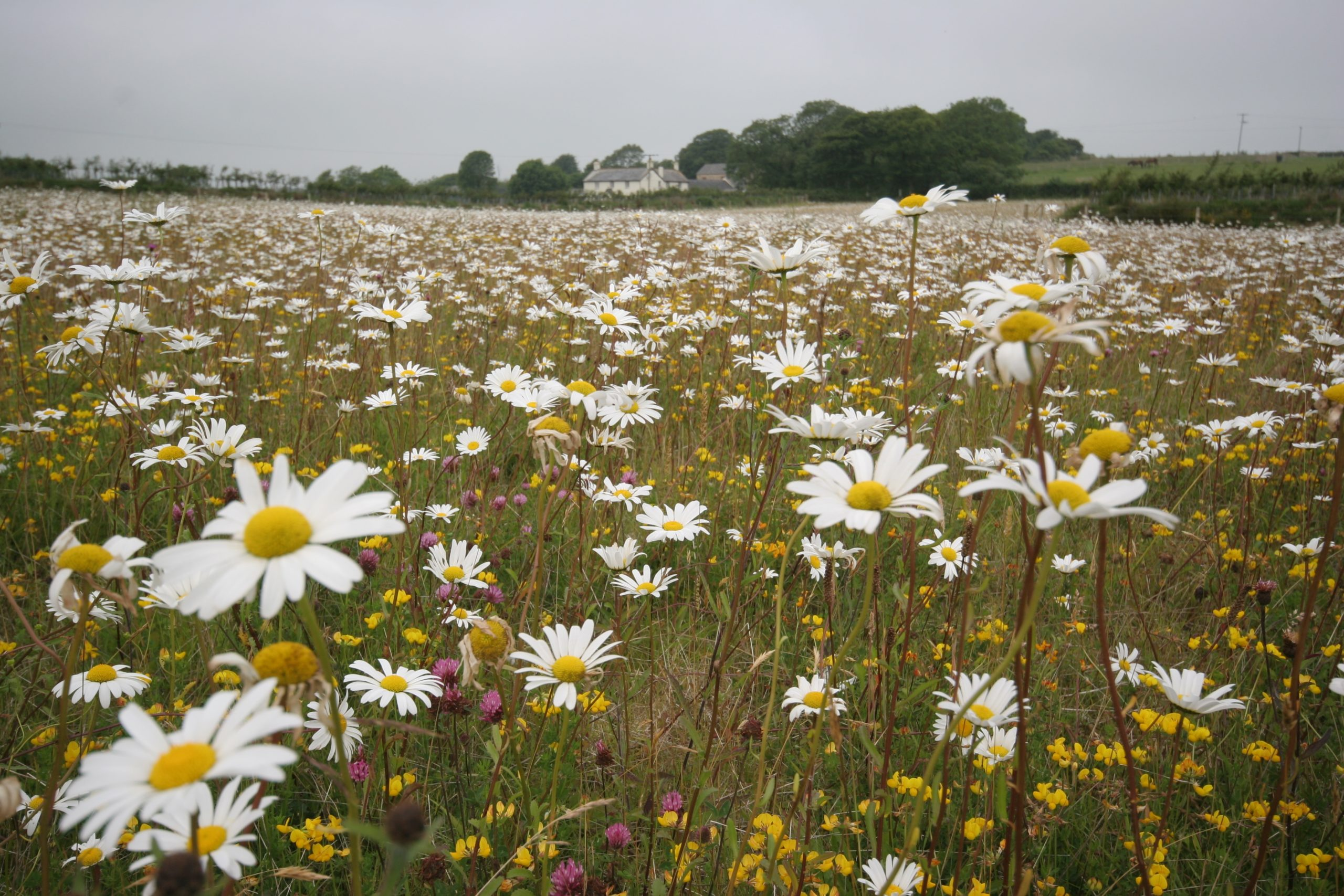 Motion: Lobbying the government on bee killing pesticide u-turn